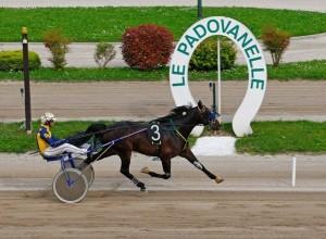 padovanelle ippodromo corse cavalli-2