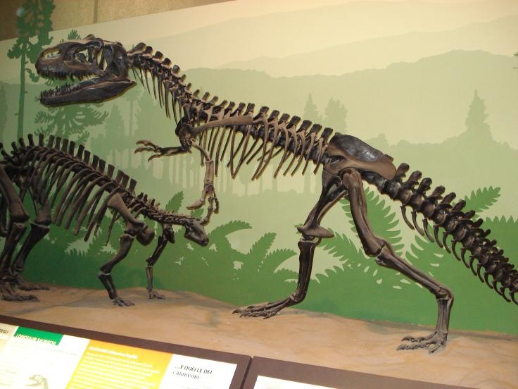 DSC01705_Scheletro_dinosauro_-_Museo_di_storia_naturale,_Milano_-_Foto_di_G._Dall'Orto_-_20-12-2006